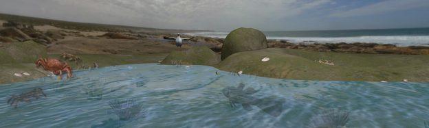 Teaching Rockpool Habitat in VR